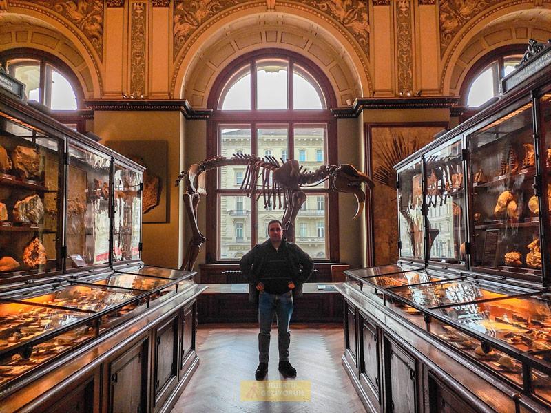 doga-tarihi-muzesi-viyana-subjektif-geziyorum